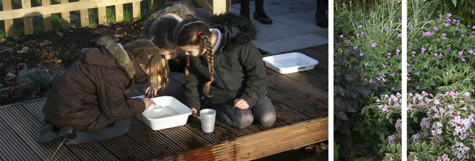 Wildlife Garden for Walker School